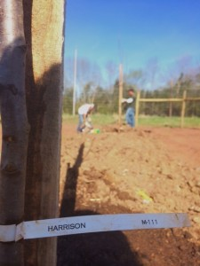 Blog post Planting the Harrisons 1