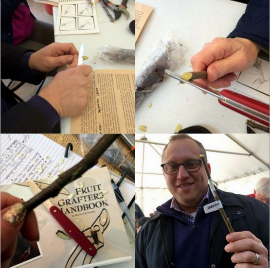 Step-by-step grafting by Charles (bottom right)