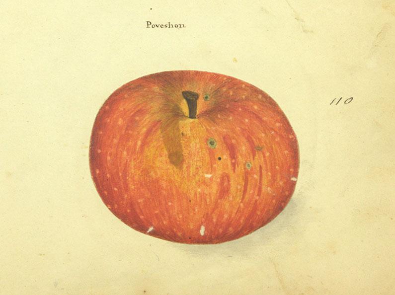 Poveshon_crop